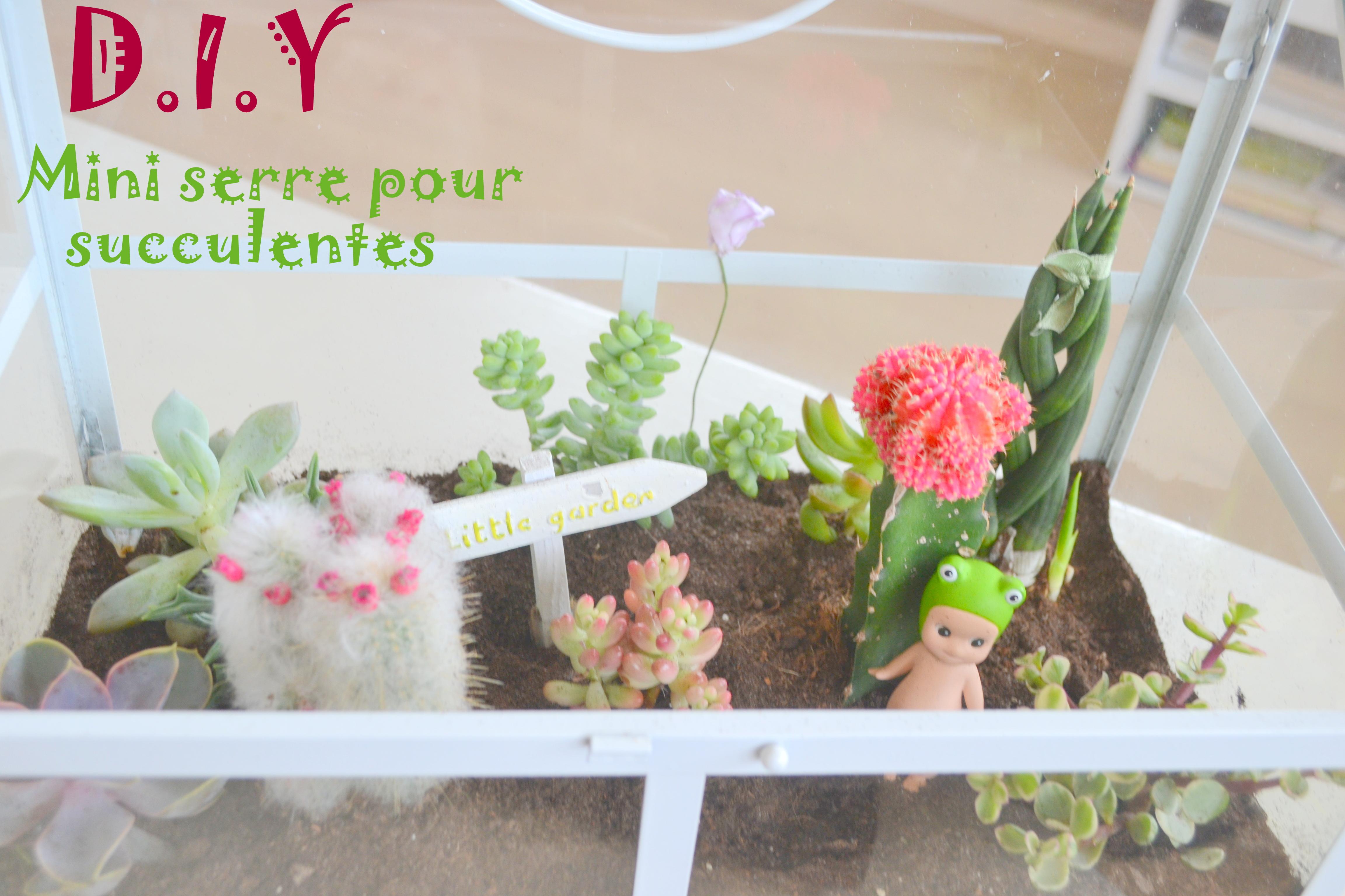 Comment Faire Un Terrarium Plante Grasse diy-déco: le mini jardin de succulentes – demoiz'elle vivi